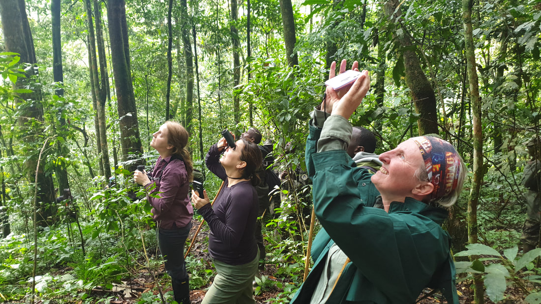 Nyungwe looking for chimps